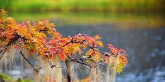 到香格里拉追寻秋的踪迹
