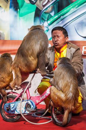 即将消失的耍猴表演