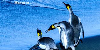 我在南极看企鹅