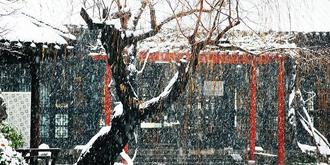 金陵下雪的日子