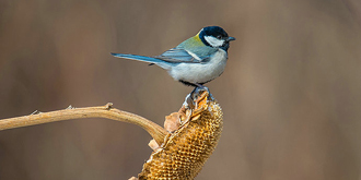 野外蹲坑拍小鸟