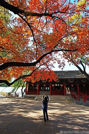 北京市区最美的红枫观赏地