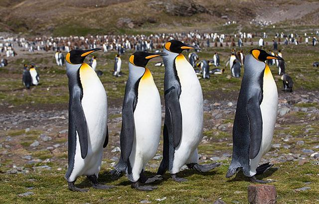 企鹅星球不太冷