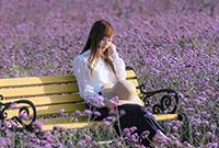 清秋浪漫的紫金花海