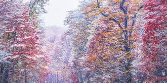 极致梦幻的童话森林
