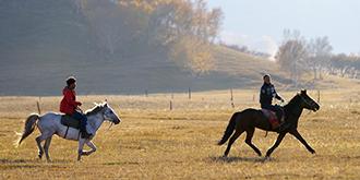 馬才是主角的軍馬場