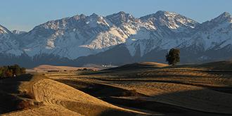 雪山下的万亩麦田