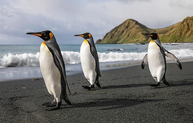 麦夸里,亚南极我最爱的神奇岛屿