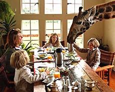 人鹿同居 亲密接触呆萌长颈鹿