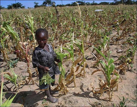 原本曾经深陷经济苦难的津巴布韦再度遭逢干旱攻击