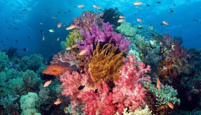 """""""珊瑚""""关于珊瑚的解析"""