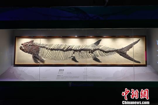 广州首座自然科学博物馆——正佳自然科学博物馆开馆