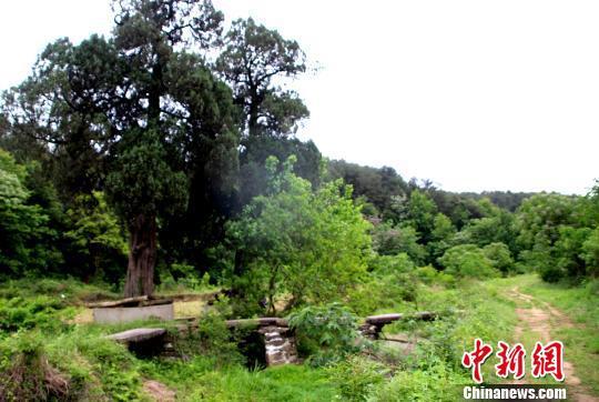 湖北孝昌发现清代光绪年间石板桥,保存完好 宋俊初 摄