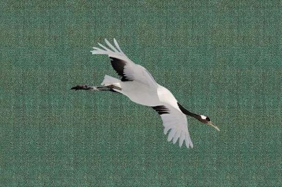 画中鹤与真鹤对比图,相似性高达99%