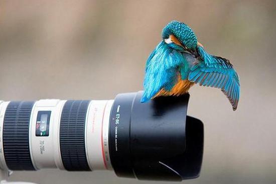 一只鸟儿落在镜头上清理羽毛,人与自然最完美的时刻。