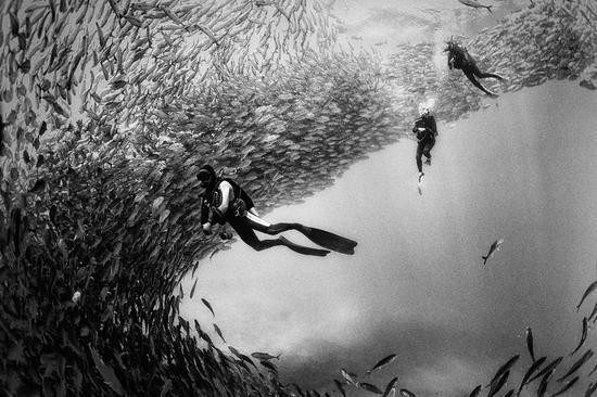 摄影——黑白鱼群