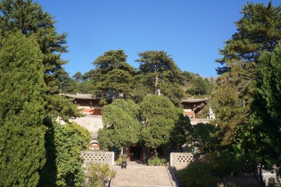 """佛光寺""""面对一座大院,周围有二三十棵古松环绕"""""""