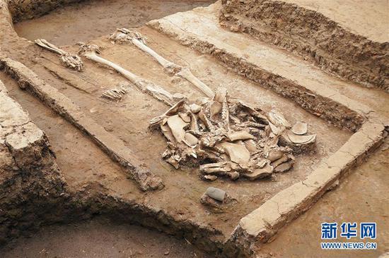 这是黄山遗址发现的疑似屈家岭文化氏族首领的高等级墓葬(4月29日摄)。 新华社记者 袁月明 摄