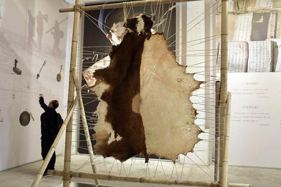 现场展示皮影制作原材料——整张牛皮。