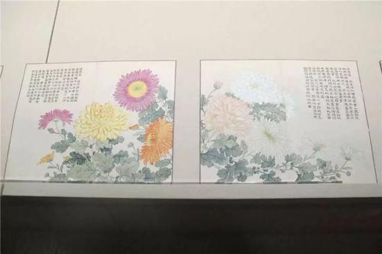 弘旿 洋菊图册 这件册画绘制了44种珍贵的菊花,画风工整妍丽
