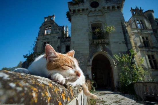 13世纪法国古堡被众筹领养