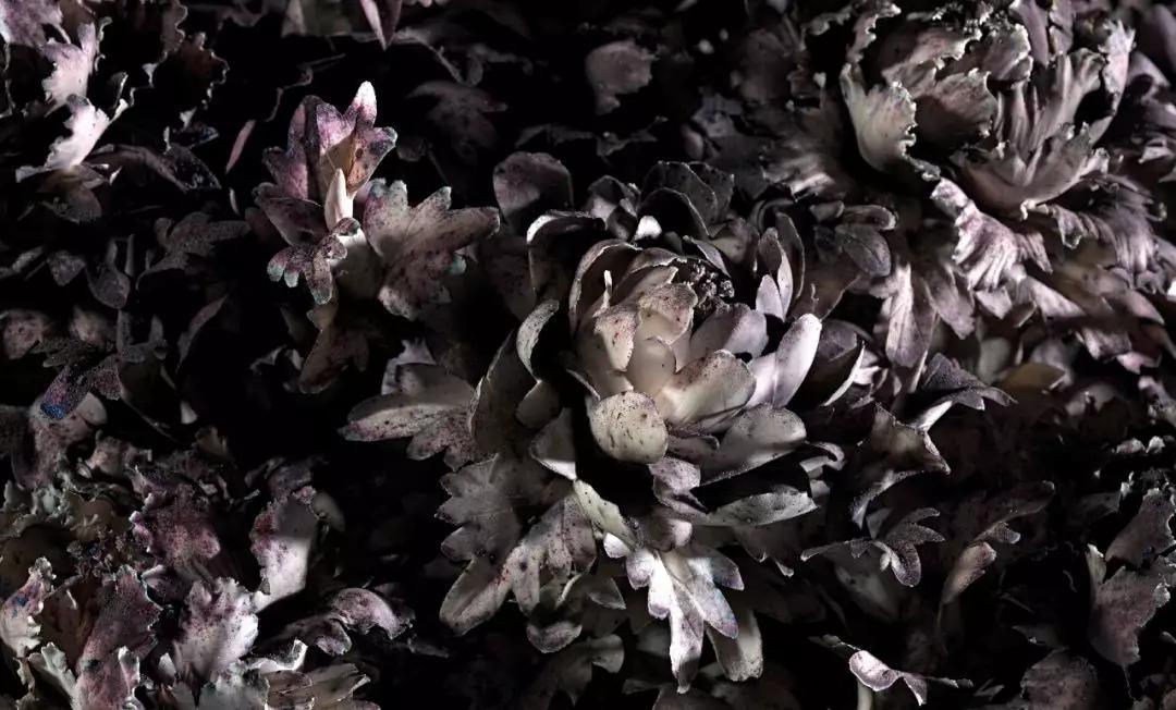《花瞬一》爆破現場,2019,墨爾本  攝影:Tobias Titz