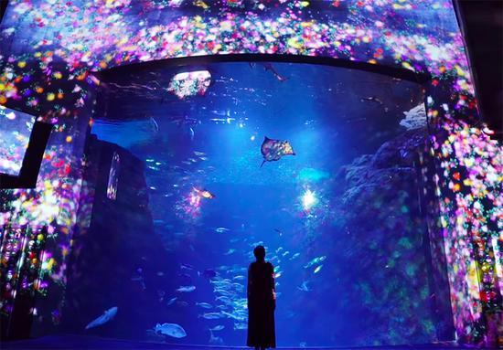 日本数码艺术打造水族馆