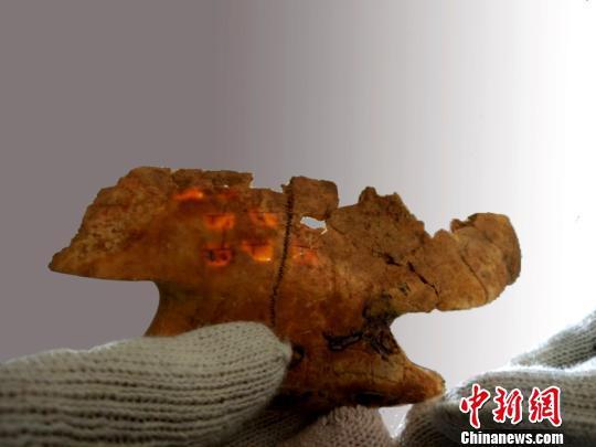 """卜甲上的""""兆纹""""。陕西省考古研究院供图"""