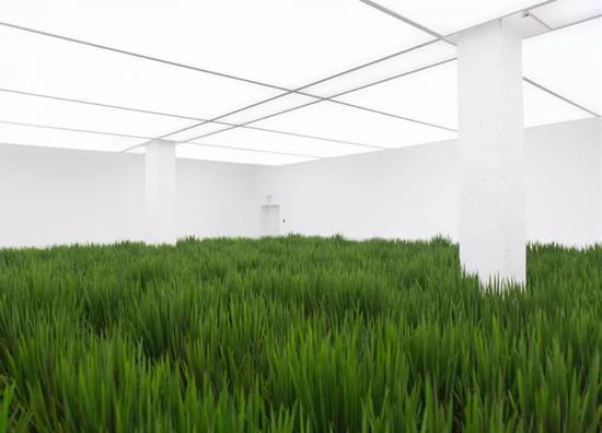 《涂抹-1》水稻(生命体) 50×50×90cm/1100盆