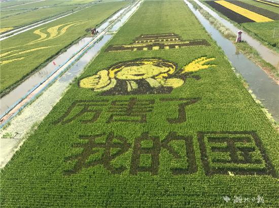 厉害了我的稻田:大开眼界的稻田画作