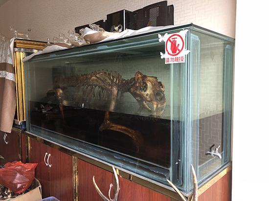 在一家由中国人经营的店里,展示着由一具完整的虎骨所制作的虎骨酒。