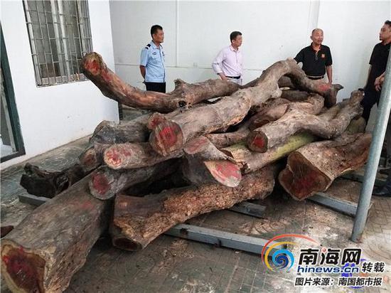 海口人民公園兩株花梨木拍賣 網上515.2萬元起拍
