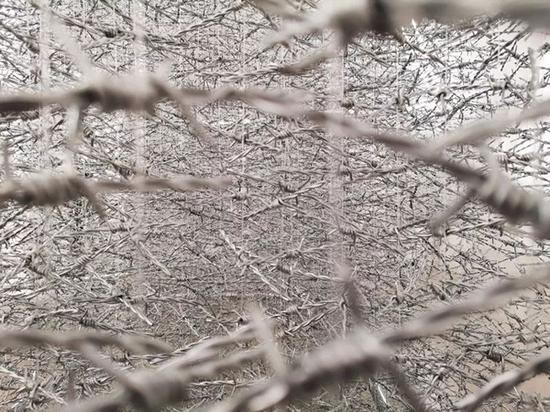 《珊瑚》局部,秦玉芬,空间装置(铁蒺藜、尼龙线、钢架结构),2019