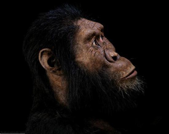 像人又像猿的化石被发现 进化论难道要被推翻