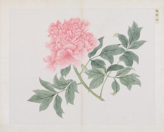 清 蒋廷锡(款)百种牡丹谱册