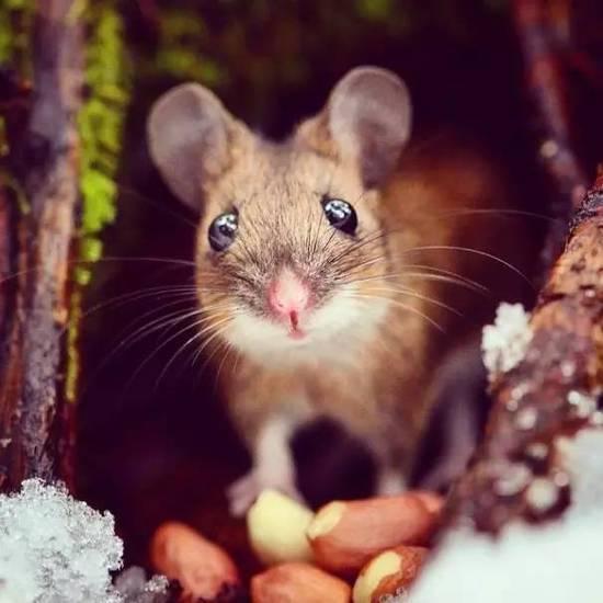 只要有他在,森林里的小动物们就保管不会饿肚子!-摄影师和动物们