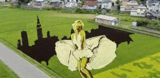 令人震惊的稻田艺术!