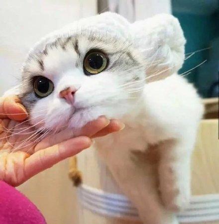 满脸无辜的萌系猫咪微信头像