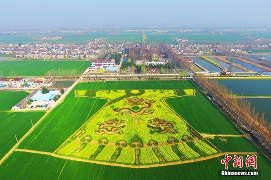 """3月21日,农民在田野内""""编织""""""""龙袍""""。南京六合油菜花盛开,当地农民加紧制作巨型""""龙袍""""和""""双龙戏珠""""迷宫,从空中俯瞰,颇为震撼。中新社记者"""
