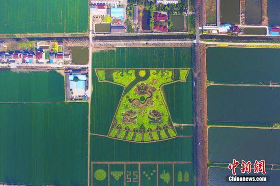 """3月21日,航拍田野上的""""双龙戏珠""""迷宫。南京六合油菜花盛开,当地农民加紧制作巨型""""龙袍""""和""""双龙戏珠""""迷宫,从空中俯瞰,一幅""""游龙戏麦""""景观,颇为震撼。中新社记者"""