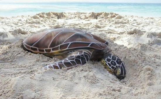 卧在沙滩上的海龟?不!仔细看才发现是一个人脸朝下卧在沙堆中。