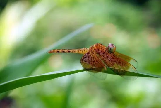 这蜻蜓标本挺不错,给粘上了吧