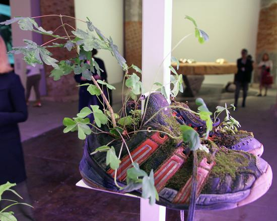 植物将历经生长和衰败的过程