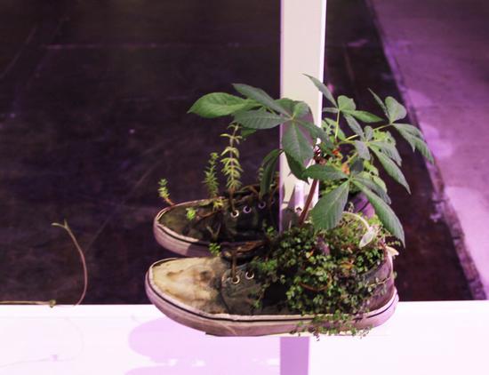 空空的鞋子里被填满了泥土和植物