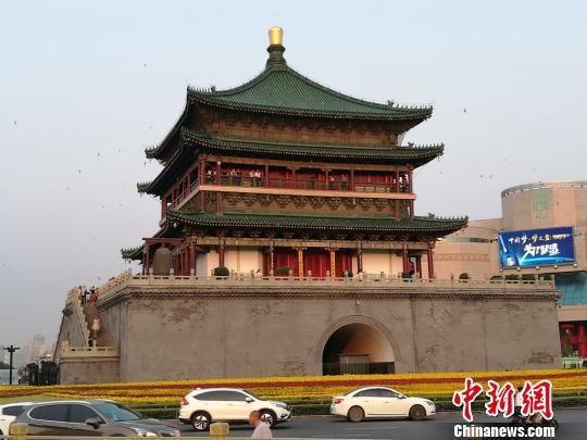 """西安600岁明钟楼现""""百燕归巢""""景象。 张枭 摄"""