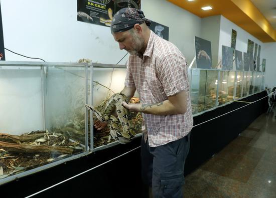 """7月1日,在克罗地亚萨格勒布,蛇类""""收藏家""""内文·弗巴尼奇照看蟒蛇。"""