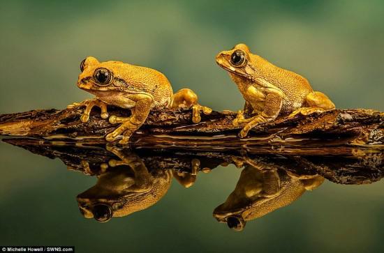 大奖得主米歇尔·豪厄尔的作品《孔雀树蛙》受到高度评价。