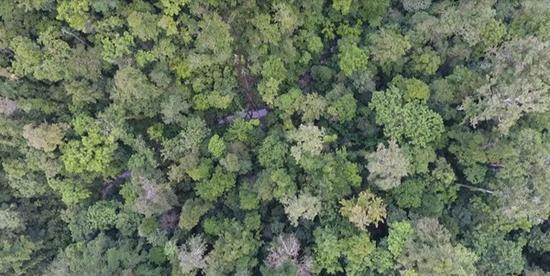 热带雨林航拍。 全球见证供图