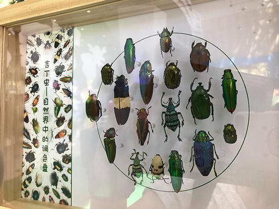 展览展出了一百多种甲壳虫标本和20多种活体甲壳虫。