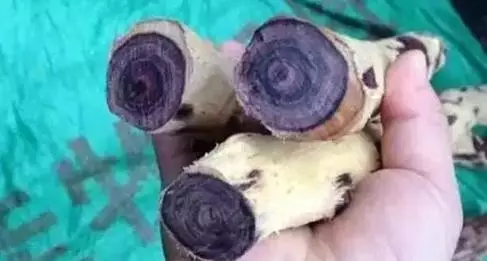 再来看看紫檀柳成品茶壶